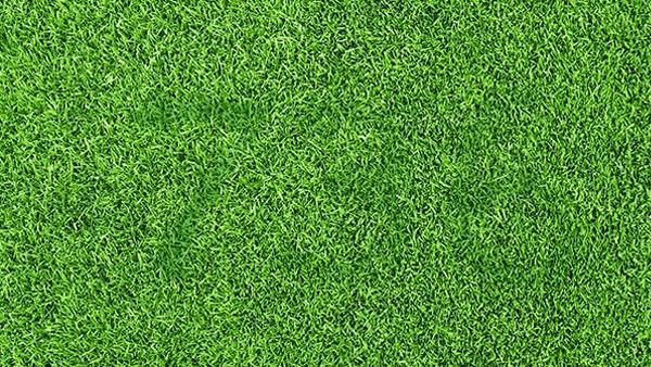 Kan du se vilket nummer som döljer sig i gräset? Klarar du detta är du inte helt normal!