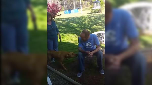 Hunden kunde inte känna igen sin ägare tills han luktade på honom