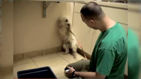 Hunden var livrädd och hade tappat all tillit till människan - men se nu hennes reaktion när de visar henne sin kärlek