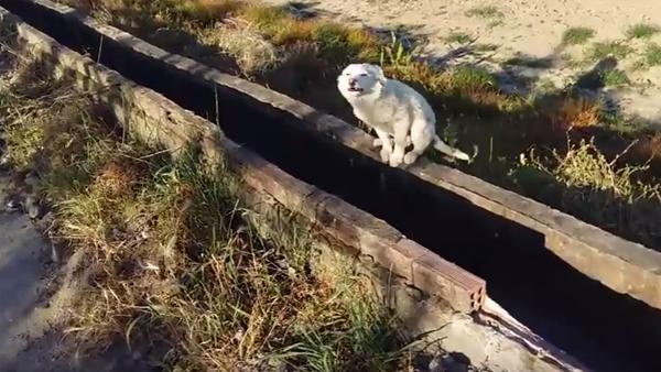 Den ledsna hunden var helt övergiven - men se hans fantastiska reaktion när han blir räddad