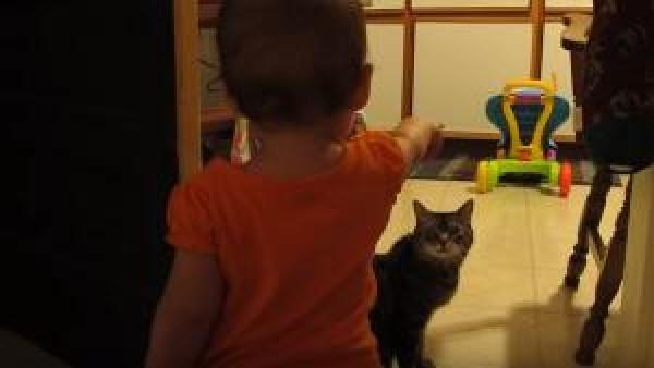 När pappan såg sin lilla flicka och katt samtala tog han fram kameran och började filma