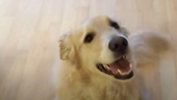 Han säger åt sin hund att städa huset - hundens reaktion fick oss att gråta av skratt