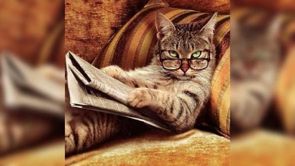 7 animerade bilder som visar att katter är riktigt smarta - det här visste nog alla kattmänniskor redan om