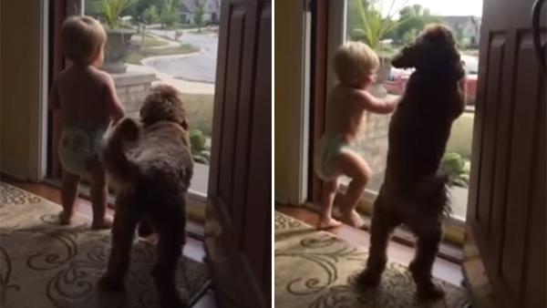 Den lilla pojken och hunden väntar ivrigt vid dörren - se bara reaktionen när de förstår vem som kommer