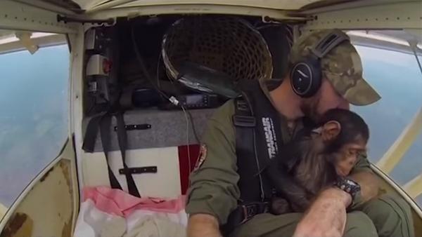 Schimpansungen agerar andrepilot i flygturen till säkerhet - det här är ju hur underbart som helst
